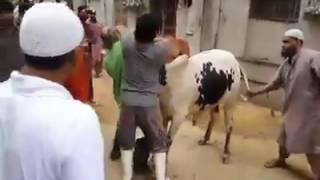 Best Professional Qasai of Pakistan | Eid ul Adha 2016 |