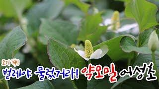 꽃&약초종류 어…