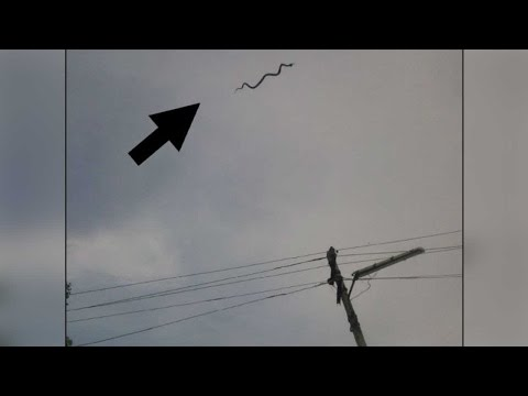 Flying snake spotted in Tamil Nadu's Coimbatore