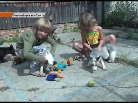 Объявления о продаже собак и щенков в новосибирске на avito.