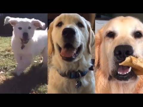 Happy 6th Birthday Buddy | Compilation Of Videos Of Buddy From 8wks Old Till Now