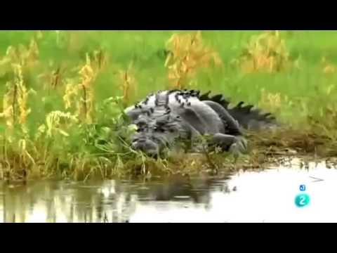 cocodrilos documental online dating