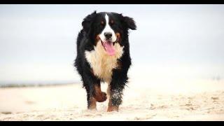 Training Your Dog Using A Petsafe Electric Dog Fence - Week 3