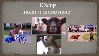 Юмор люди и животные