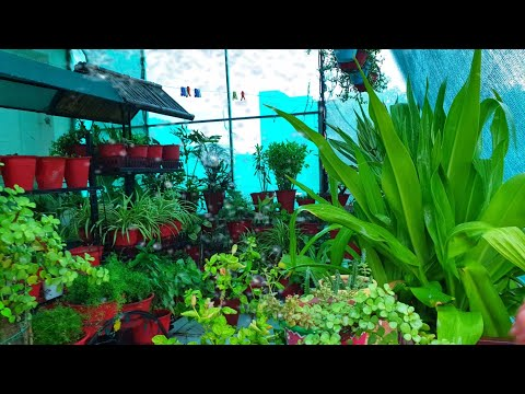 My Plants Enjoying Rain Under Green Net || Fun Gardening
