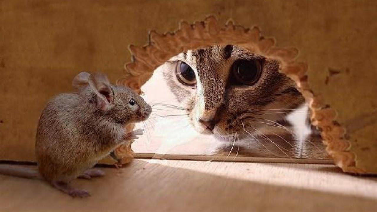 Видео про смешилки про котов