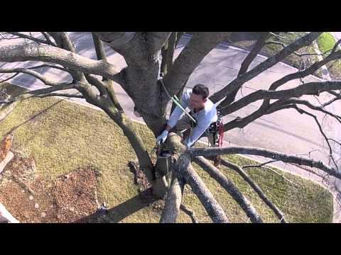 GoPro Tree-Climbing : Ground to Canopy