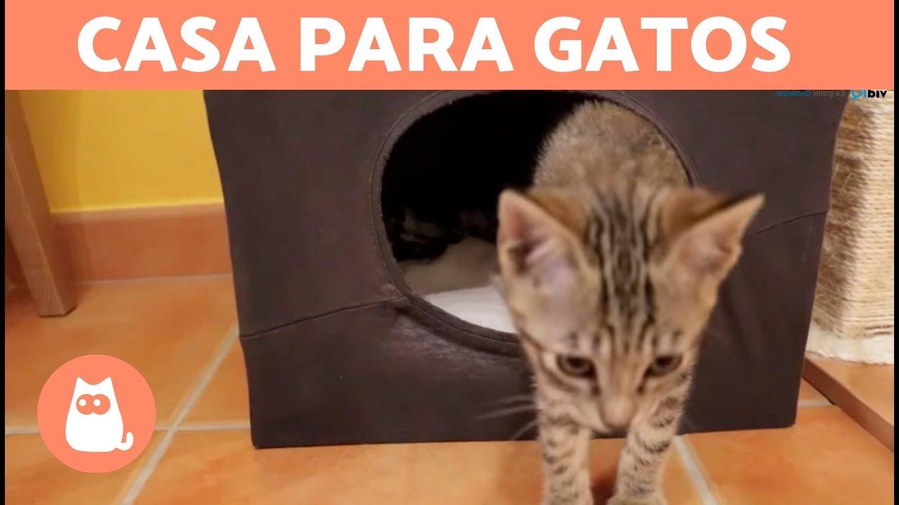 Casa para gatos casera con una camiseta diy youtube - Casas para gatos baratas ...