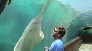 HUGE SAW SHARK, BAHAMAS, AQUARIUM IN BAHAMAS, ATLANTIS PARADISE ISLAND RESORT,