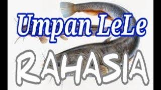 UMPAN MANCING IKAN LELE JITU AMPUH JOS ISTIMEWA RAHASIA JAWARA