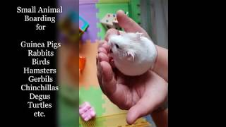 Small Animal Boarding - Little Pets Holiday Home