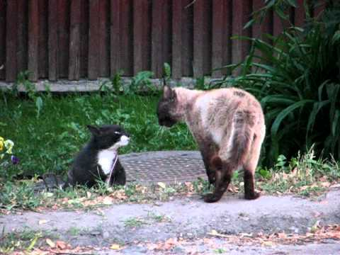 Cats arguing about territory