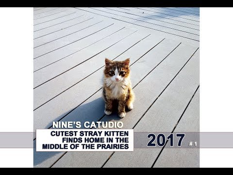 Cutest Stray Kitten Finds A Home On The Prairies ❤  2017 (#1)