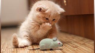 Приколы с животными Подборка смешного видео с котами