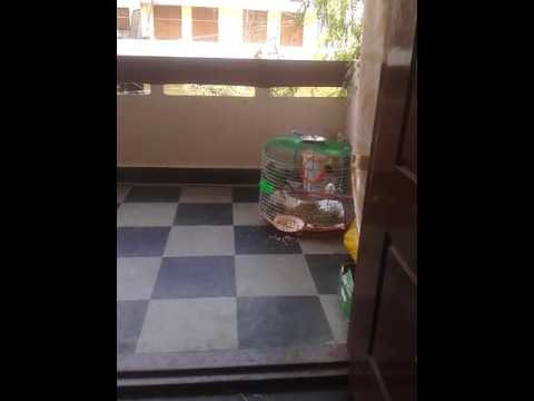 How to make parrot cage easy