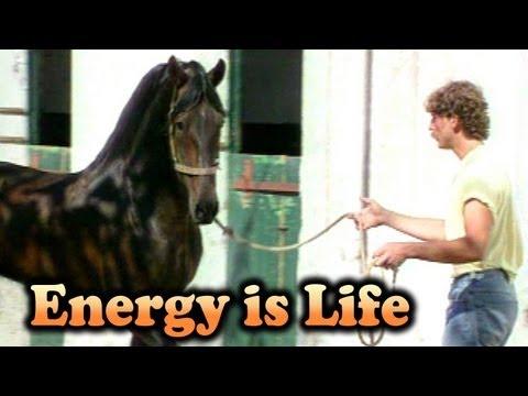 Hempfling - Leading A Dangerous Stallion (PRE)