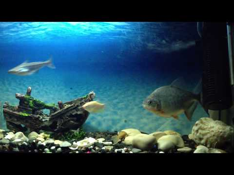 Aquarium - Requin
