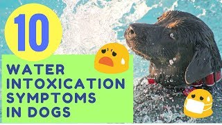 10 Water Intoxication Symptoms in Dogs