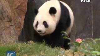 World's oldest giant panda in captivity