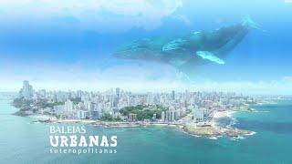 Baleias Urbanas - Soteropolitanas