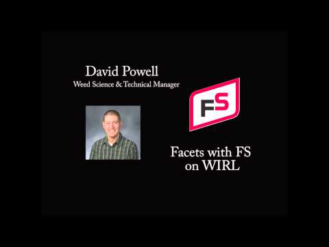 Facets of FS- David Powell