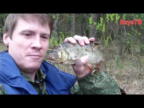 Река пра рязанская область рыбалка видео