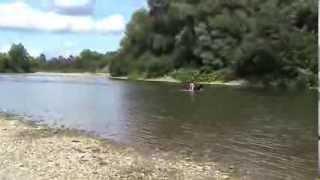 Собаки на природе. Немецкая овчарка и йоркширский терьер г. Львов часть 3