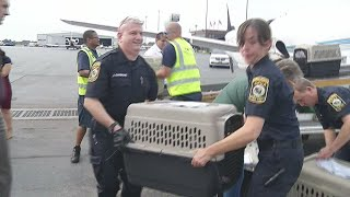 Hurricane Irma dogs arrive in WNY