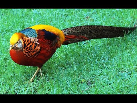 Cute Beautiful Animals Birds Video Compilation 2014 Hd Video