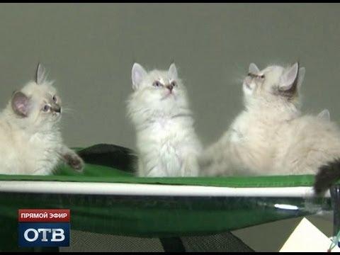 В Екатеринбурге выбрали самую красивую кошку