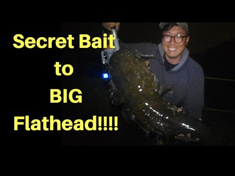Secret bait and Tip for  Big Flathead!!!!  (Schuylkill River, PA)