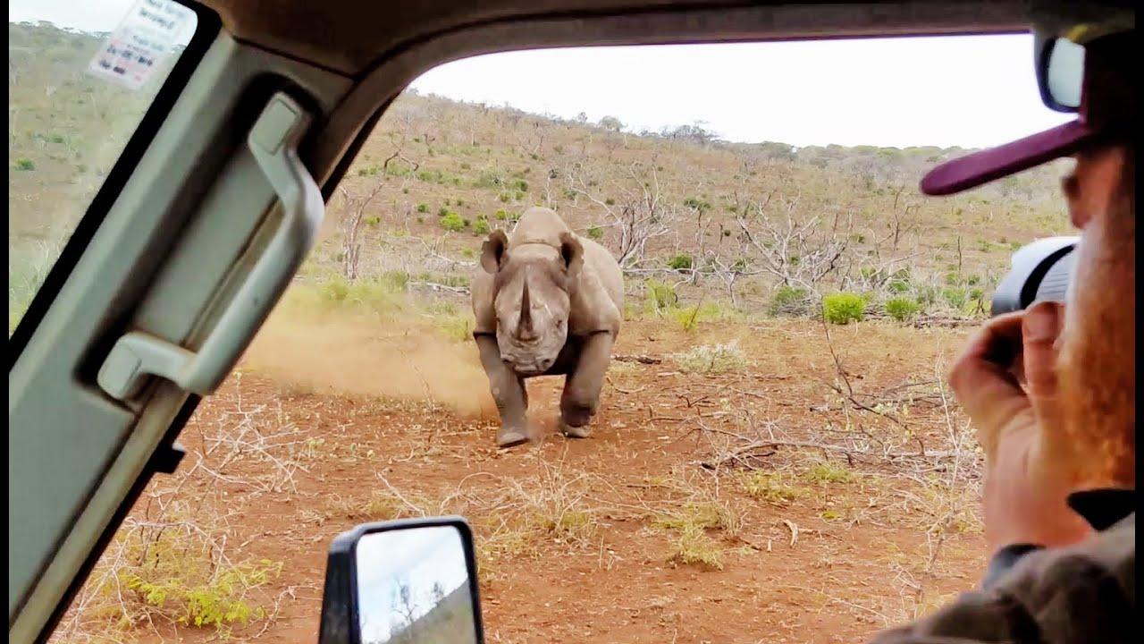 車に乗ってる男性。野生の際を撮影していると勢いよく車に向かってきた。