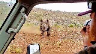 Black Rhino Charges Car