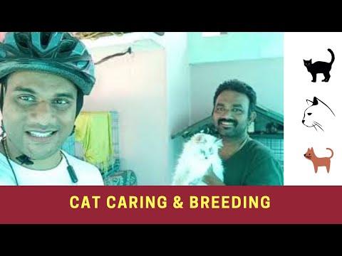 പൂച്ച വളർത്തൽ | Cat Breeding |  Cat Caring Tips | Cat Breeder Binoy from Kochi | CycleBells | Calico