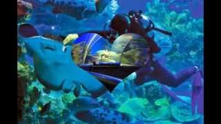 Aquaria KLCC - Tourist Attractions in Malaysia