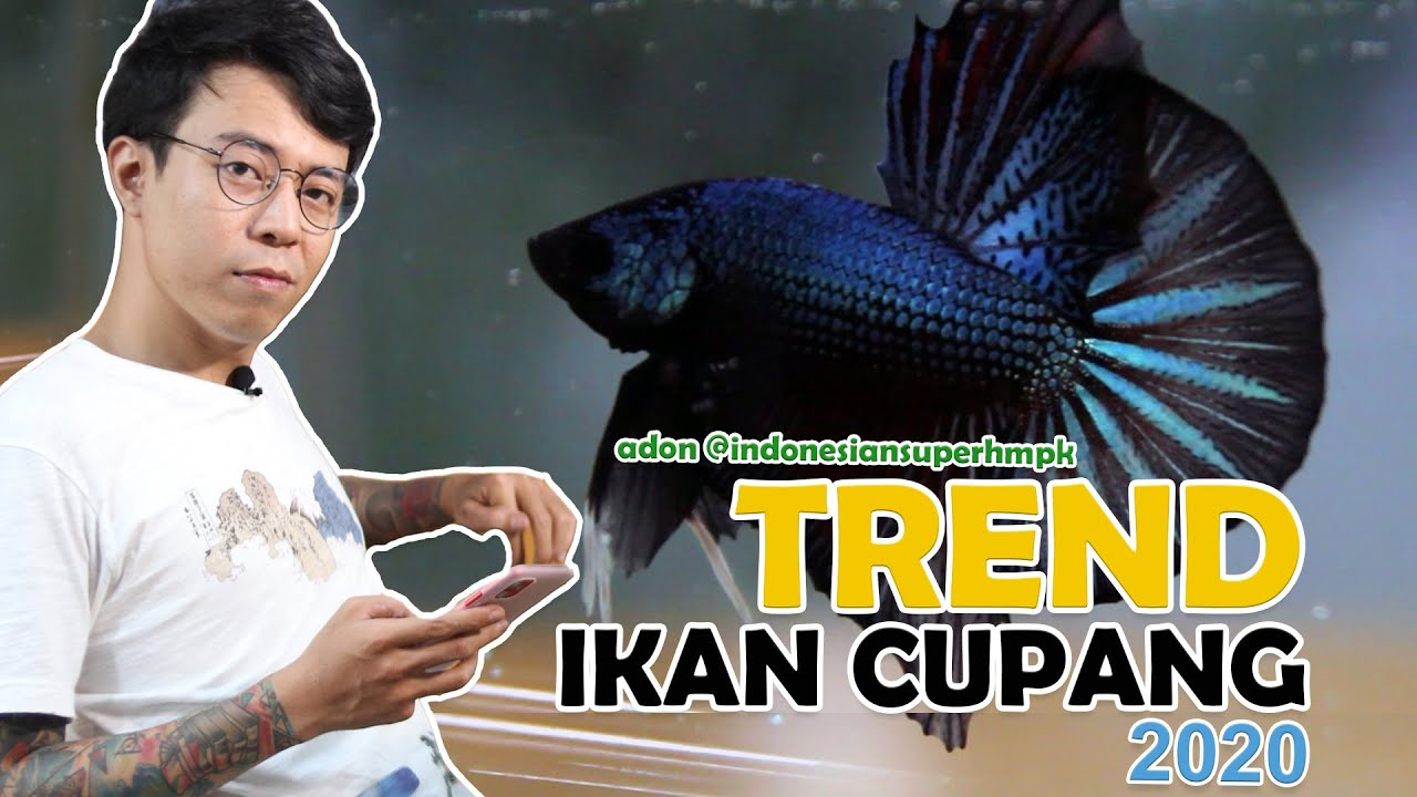 Trend Ikan Cupang 2020 Indonesiansuperhmpk Eps 1 Youtube