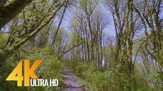 4K Virtual Walk in the Forest along the Creek - Upper Coal Creek Trail - West Trailhead
