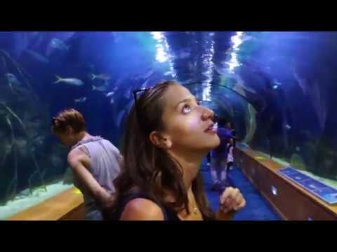 Tour Valencia - Hemisferic - Oceanografic - Bioparc (VLOG)