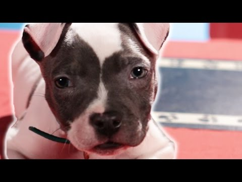 Adoptable Dogs Try Fancy Food
