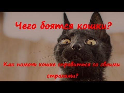 Вопрос: Почему кошка боится всех, кроме своих хозяев?