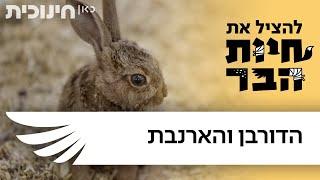 להציל את חיות הבר - הדורבן והארנבת