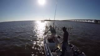 Судак на дамбе Финского залива в Санкт-Петербурге