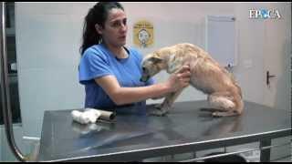 Vai de dor peso trás, não sem mas cão colocar na perna