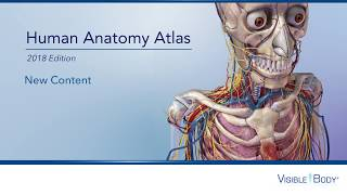 New Content: Human Anatomy Atlas 2018 Site License