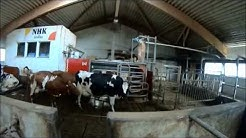 Automatic milking barn / Lypsyrobottinavetta