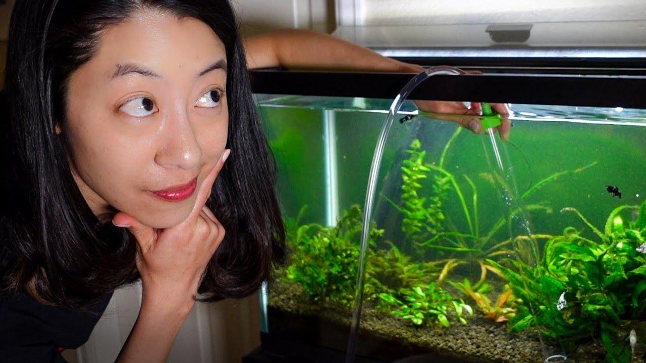 How Often Should I Clean My Fish Tank?