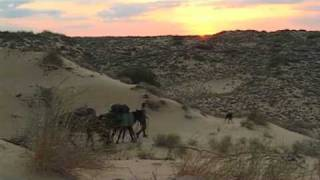 Kazakh Desert: Tim Cope on horseback from Mongolia to Hungary