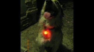 Как выбрать светящийся ошейник для животного  и выбрать кулон безопасности для ребенка.