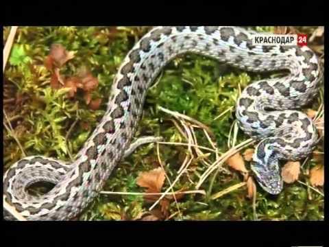 Высокую активность змей