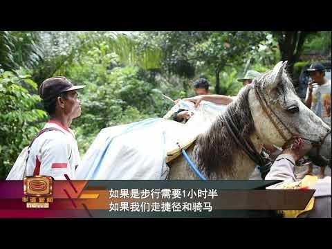 印尼大选选票需求量大 出动马匹飞机送偏远选区